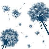Vector dandelion Stock Photos