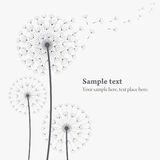 Vector dandelion. The vector dandelion on a wind loses the integrity Stock Images