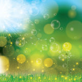 Vector Dandelion blowing nature green background Royalty Free Stock Image
