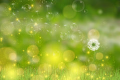 Vector Dandelion blowing nature green background Stock Images