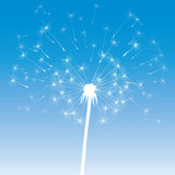 Vector dandelion icon Stock Photography