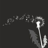 Vector dandelion Stock Images