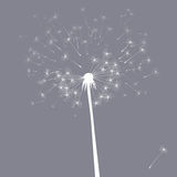 Vector dandelion illustration Stock Image