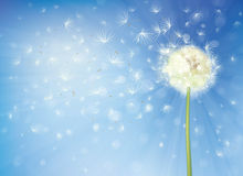 Vector  dandelion on sky background. Stock Photo