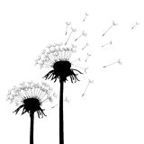 Vector Dandelions Royalty Free Stock Photo