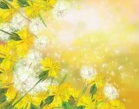 Vector dandelions background. Stock Photography