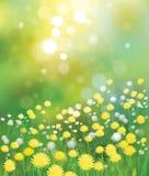 Vector dandelions background. Stock Images