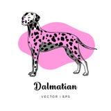 Vector das bunte Bild, das eine nette weibliche dalmatinische Hundestellung darstellt Stockfotos