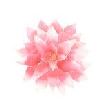 Vector de bloemroze van de waterverflotusbloem Stock Foto