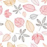 Vector de herfst kleurrijke hand getrokken bladeren stock illustratie