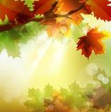 Vector de herfstachtergrond met esdoornblad Stock Afbeelding