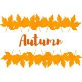 Vector de herfstbladeren Stock Afbeeldingen