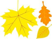 Vector de herfstbladeren Stock Fotografie