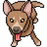 Vector de hondhuisdier van de pixelkunst Stock Foto