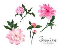 Vector de illustratiereeks van pioenenbloemen vector illustratie