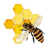 Vector de la abeja del color Foto de archivo libre de regalías