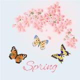 Vector de la cereza y de las mariposas del fondo de la primavera Fotos de archivo