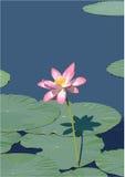 Vector de la flor de Lotus Imágenes de archivo libres de regalías