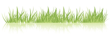 Vector de la hierba verde Imagen de archivo libre de regalías