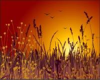 Vector de la hierba y de la puesta del sol Fotos de archivo