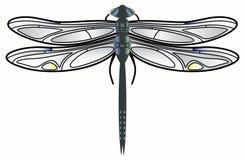 Vector de la libélula. Foto de archivo