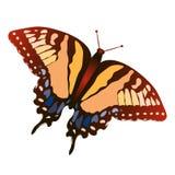 Vector de la mariposa Fotografía de archivo libre de regalías