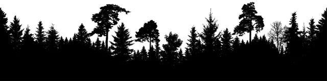 Vector de la silueta del bosque Abeto escocés, árbol de navidad, picea, abeto, pino Panorama inconsútil stock de ilustración