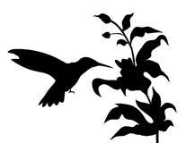 Vector de la silueta del colibrí y de las flores Foto de archivo