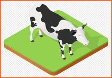 Vector de la vaca Fotografía de archivo libre de regalías