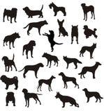 Vector de las dimensiones de una variable de los perros Imagen de archivo libre de regalías