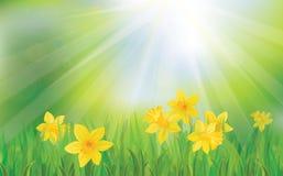 Vector de las flores del narciso en fondo del cielo. stock de ilustración