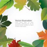 Vector de las hojas coloridas del otoño Imagen de archivo libre de regalías