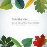Vector de las hojas coloridas del otoño Fotografía de archivo