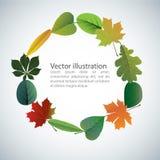 Vector de las hojas coloridas del otoño Fotografía de archivo libre de regalías