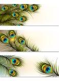 Vector de las tarjetas de visita fijado con los helechos del pavo real Imagenes de archivo
