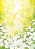 Vector de lente tot bloei komende boom royalty-vrije illustratie
