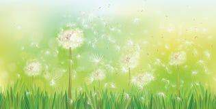 Vector de lenteachtergrond met witte paardebloemen stock illustratie