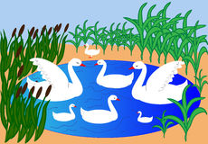 Vector de los cisnes Imagenes de archivo