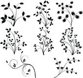 Vector de los elementos del diseño floral Imagen de archivo libre de regalías
