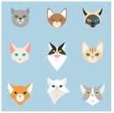 Vector de los emoticons de las cabezas de los gatos Fotografía de archivo libre de regalías