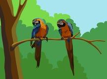 Vector de los Macaws stock de ilustración