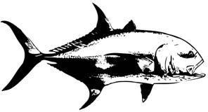 Vector de los pescados de Jack Crevalle Imagen de archivo libre de regalías