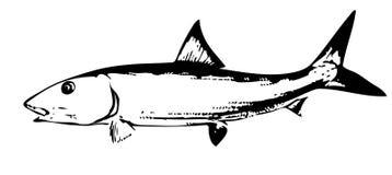Vector de los pescados del Bonefish Fotografía de archivo libre de regalías