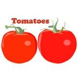 Vector de los tomates Fotos de archivo libres de regalías