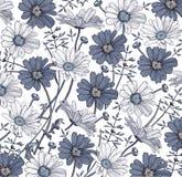 Vector de los Wildflowers de la hierba de la manzanilla Dibujo, grabado Flores realistas azules blancas florecientes del fondo he Imagen de archivo libre de regalías