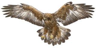 Vector de oro del drenaje de la mano del aterrizaje del ealge Imagen de archivo libre de regalías