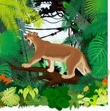 Vector de Poemaconcolor of de poema van de poemapoema en karmozijnrood-Rumped toucanet in wildernisregenwoud Stock Fotografie