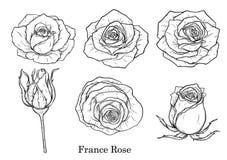 Vector de Rose fijado a mano dibujo Fotos de archivo