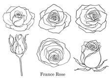 Vector de Rose fijado a mano dibujo Imagen de archivo libre de regalías