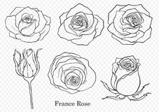 Vector de Rose fijado a mano dibujo Imagen de archivo